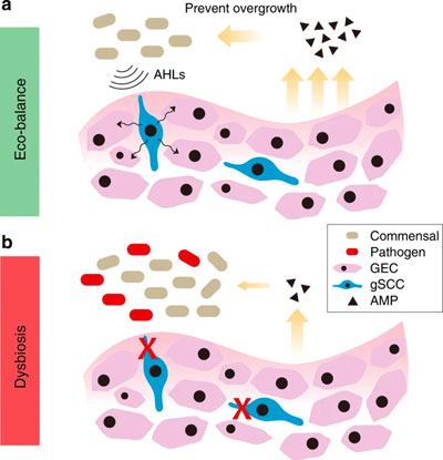 Study Identifies Cells in Gingivae that Protect Against Periodontitis