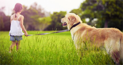 Norwegian Study Focuses On Dog-Assisted Therapy in Dental Practice